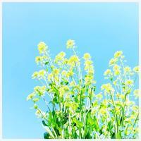 "p1037 "" 弄花香滿衣 "" 松の川緑道 2019年3月15日 - 侘び寂び"