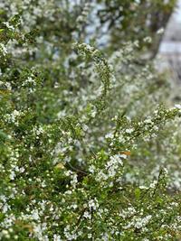春の嵐でしたね - ルーシュの花仕事