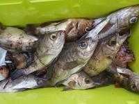 津奈木町沖の船釣り - 芦北周辺の釣り