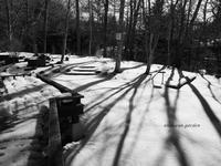 光と影の庭 - 永楽屋ガーデン    自然を愛する スローライフな庭造り