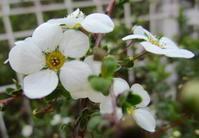 花の色は… - モルゲンロート