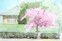 河津桜-2 - ryuuの手習い
