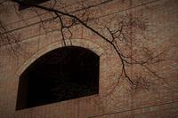 枝ぶり - フォトな日々