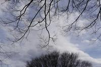 春の触手 - フォトな日々