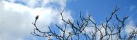 木蓮と青空と… - 遊工房cooほっこり通信
