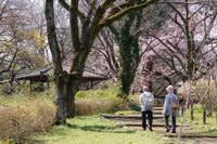 神代の3月〜山桜のある風景 - 柳に雪折れなし!Ⅱ
