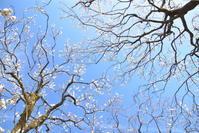 平成最後の梅の花♪ - 今日もカメラを手に・・・♪