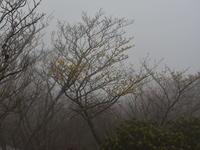 春の花散策 - 風の吹くまま
