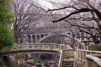 桜カウントダウン  東京北区 音無親水公園と飛鳥山公園 - みけらぶさんぽ