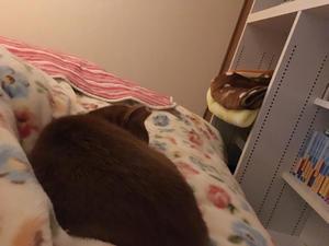 お知らせ - 「両手のない猫」チビタと愉快な仲間たち