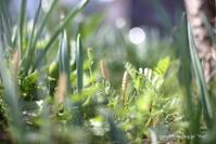 小さな春 - *Any*