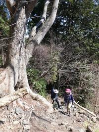 3/15木下沢から景信山・春浅し♪ハーモニー山歩部 - そらいろのパレット
