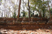 ワット・ウモーン寺院の周りに - TOM'S Photo