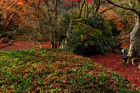 京の紅葉2018散り紅葉に染まる宝厳院 - 花景色-K.W.C. PhotoBlog