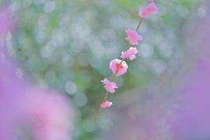 春につつまれて - 日記のような写真を2