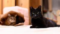 似た者どうし - 猫と夕焼け