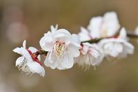 春の花☆彡 - DAIGOの記憶