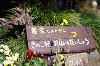根府川おかめ桜まつり③ - じゅうべえな日々♪