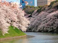 【3/27~4/2】江戸2大しだれ桜と桜3大名所めぐり&船上の特等席!東京スカイツリーお花見貸切クルーズ付バスツアー~おにぎりセット付~ - 日帰りツアー・社会見学・東京観光・体験イベン