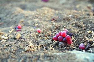 3.18 - anemone