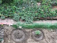 苗木の植え付けと花 - いととはり