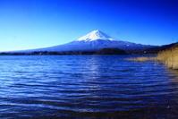 31年3月の富士(6)河口湖の葦と富士 - 富士への散歩道 ~撮影記~