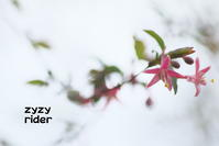 空中に浮かぶ花 - ジージーライダーの自然彩彩