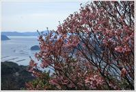 陽光ザクラにメジロがいっぱい - ハチミツの海を渡る風の音