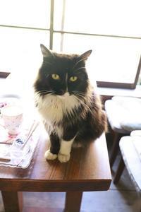里山のさっちゃんと仲間たちに会えました➁ - きょうだい猫と仲良し暮らし