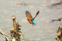 週末忙しいN川のカワセミ、昨日未掲載の雑多なショツト。 - 小川の野鳥達