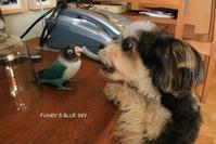 B.B & Chipo*ある日とある日 - FUNKY'S BLUE SKY