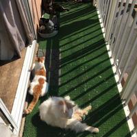 ベランダリゾート季節到来 - ぶつぶつ独り言2(うちの猫ら2018)