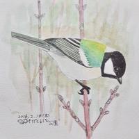 #野鳥スケッチ #ネイチャー・ジャーナル『四十雀』Parus minor - スケッチ感察ノート (Nature journal)