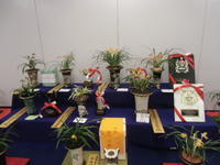全国日本春蘭連合会展示大会2 - DREAM GRASSES
