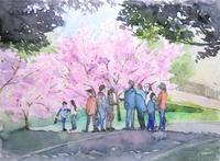 河津桜-3 - ryuuの手習い