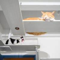 パパ部屋でくつろぐ男の子チーム - 猫と夕焼け