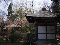 王禅寺ハクモクレン観音地蔵 - エンジェルの画日記・音楽の散歩道
