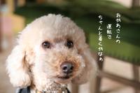いざ、出陣! - gin~tetsu~nosuke