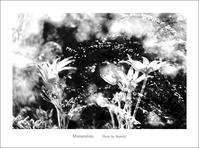 春風のお遊び - Minnenfoto