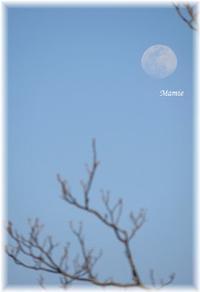春のお月さま - おだやかに たのしく Que Sera Sera