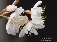 三月後半句まとめ - HAIKU/summer PHOTO