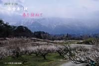 小雪舞う朝 春を訪ねて(いなべ市農業公園梅林他) - 日本全国くるま旅