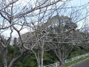 今年もやって来ました!三井松島ホールディングス。 - 故郷の島の独り言