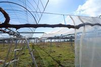 ぼちぼちビニール張り - ~葡萄と田舎時間~ 西田葡萄園のブログ
