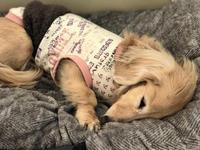 19年3月19日 ペロペロ&可愛いおチリ! - 旅行犬 さくら 桃子 あんず 日記