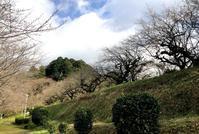 メスリ山古墳 - 奈良・桜井の歴史と社会