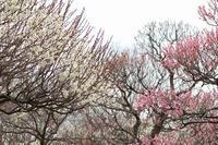 春を告げる花 - yuru run*run Cafe