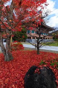 京の紅葉2018散り紅葉美しき智積院 - 花景色-K.W.C. PhotoBlog