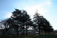 静かな朝 - ぶらり散歩 ~四季折々フォト日記~