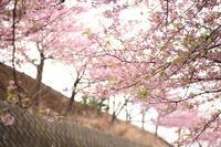 まぐろきっぷの旅【5】 - 写真の記憶
